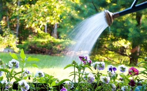 Garden Water Saver by Water Saving Tips For Gardening Greenmylife Anyone Can