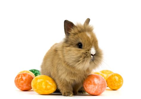 why is the rabbit associated with easter rabbit holidays easter eggs animals baby wallpaper