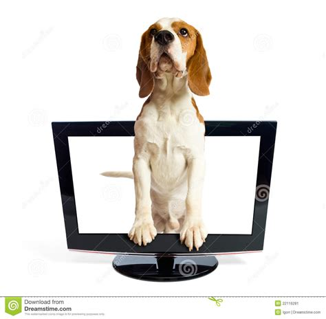 puppy monitor getting out of the monitor stock image image 22116281