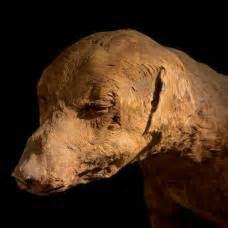 imagenes de uñas egipcias есть ли чувство любви у животных