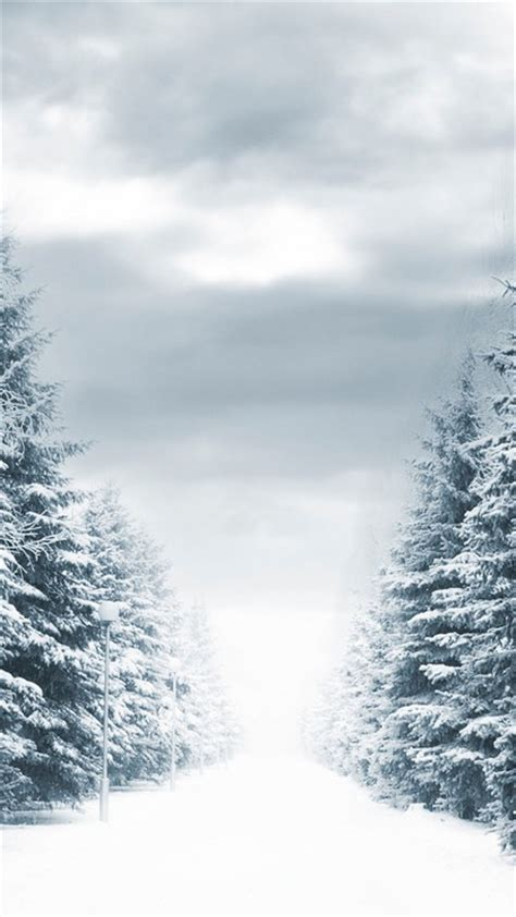 forests landscapes roads snow trees wallpaper