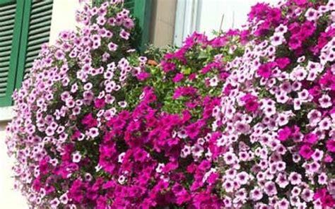 nomi di fiori primaverili fiori primavera fiori per cerimonie fiori di primavera