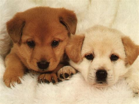 cute dog pictures beautiful dogs picture dog images puppy  nice wallpapers