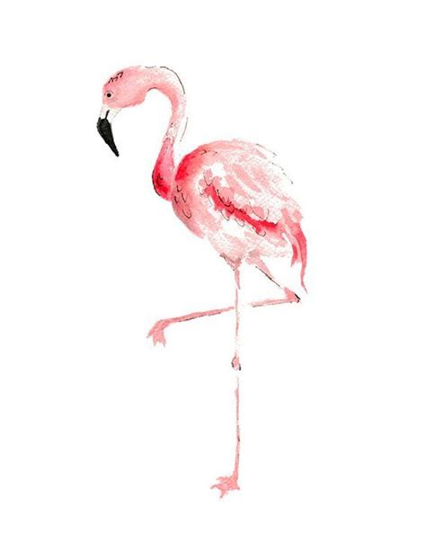 Flaminggo Top Ori Chi 205 best images about i flamingo on