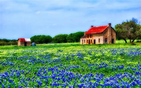 country cottage wallpaper hill country cottage blue flowers high resolution