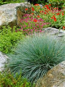 decorative grass ornamental grass 101