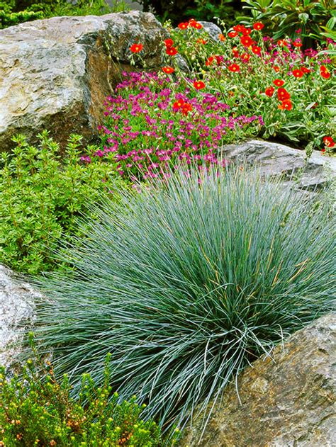 Bhg Kitchen And Bath Ideas by Ornamental Grass 101