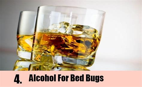 bed bugs alcohol 9 home remedies to kill bed bugs natural treatments