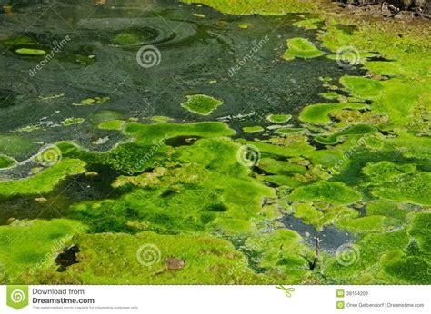 pond swamp water stock image image  nature marshland