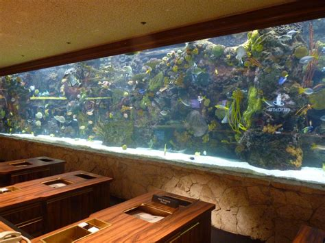 100 gallon fish tank on second floor 10 000 gallon saltwater fish tank 20 000 gal tank