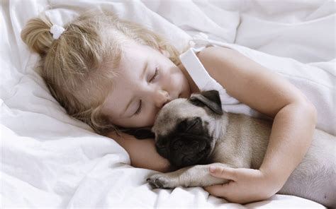 baby pugs sleeping sleeping child with pug puppy images pictures photos hd baby litle pups