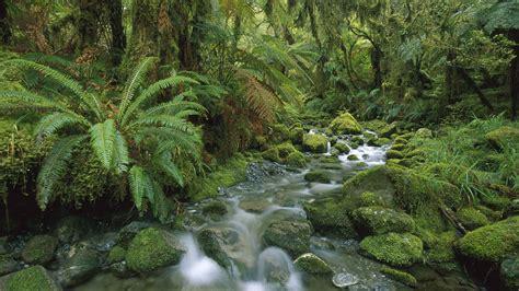 Dschungel Pflanzen by Die 50 Besten Dschungel Hintergrundbilder