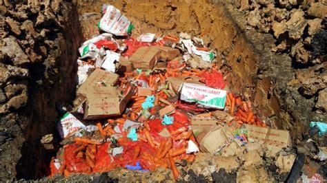 ratusan kilogram wortel   kg daging alana dimusnahkan