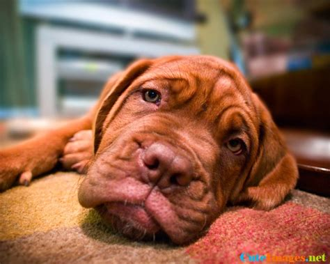 dogs name in up zoe up dogs cuteimages net