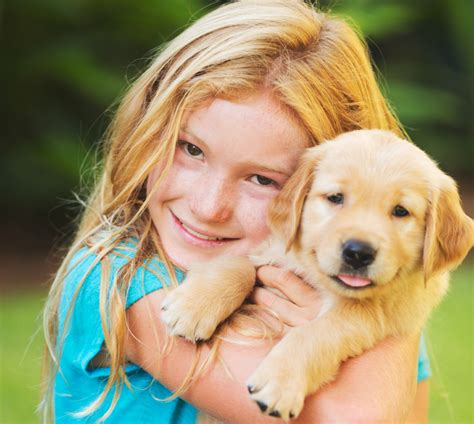 golden retrievers and children a and a child grow up together golden retrievers