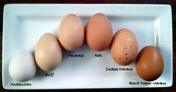 egg color chart a rainbow of egg colors what breed of chicken lays which