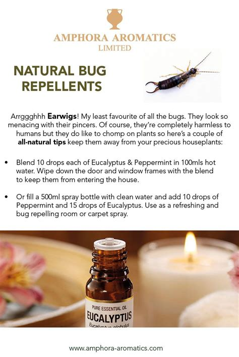 Best 25+ Earwig control ideas on Pinterest | Insect ...