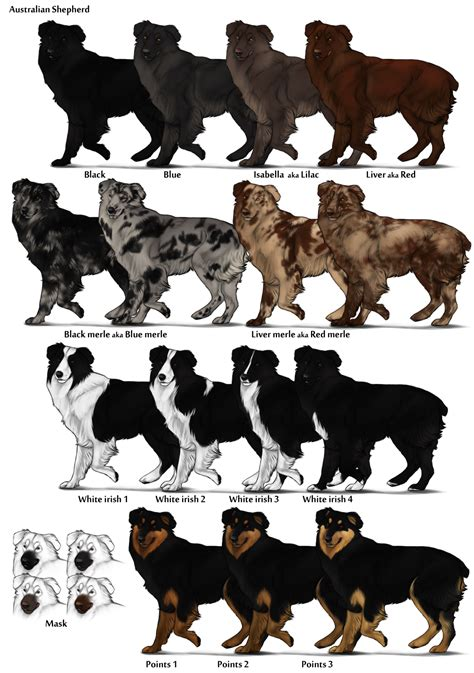 puppy color calculator image australian shepherd color chart png herding farms wikia fandom