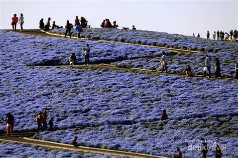 Karpet Jepang haran karpet bunga di jepang cantik banget