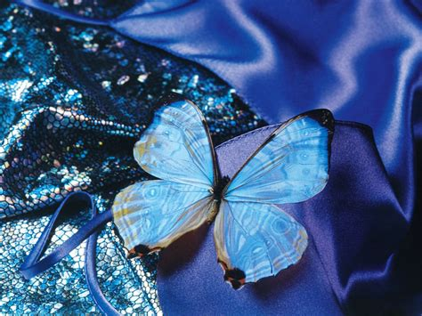 wallpaper blue beautiful wallpapers blue butterfly art wallpapers