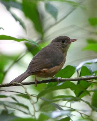small backyard birds 17 best images about mission beach birds on pinterest