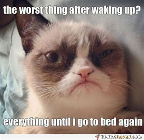 Grumpy Cat Sleep Meme - the need for sleep