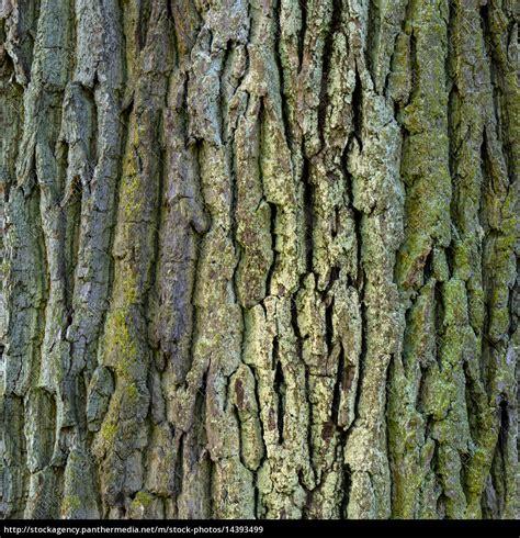 Rinde Der Eiche by Natur Hintergrund Baum Holz Textur Detailaufnahme