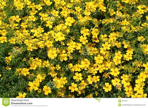 bed of flowers bed of flowers royalty free stock photos image 977518