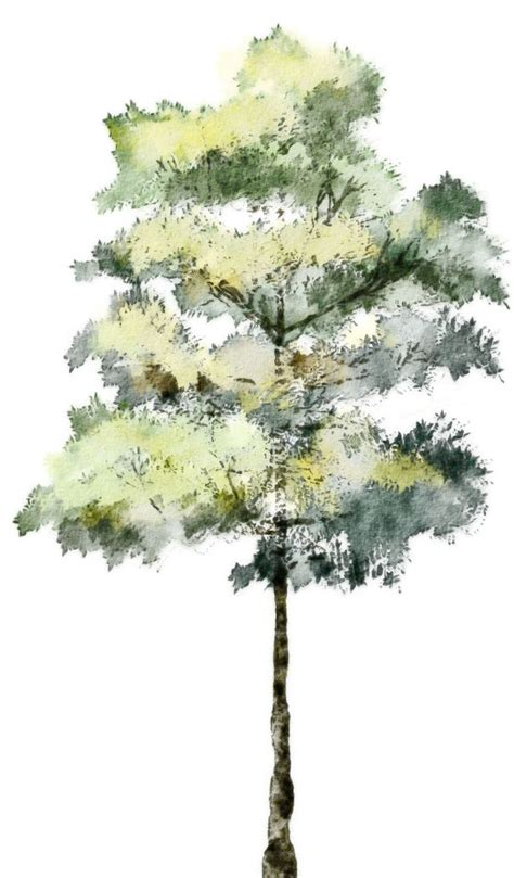 tree architecture drawing watercolor trees search psd 3d