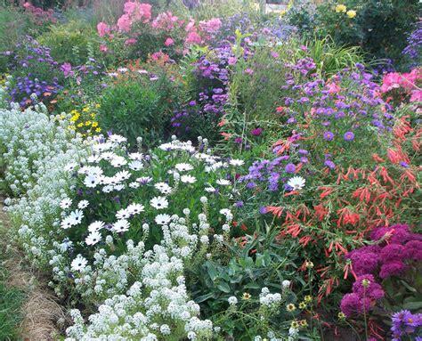 Photographing Flowers The Autumn Garden Flowers For Gardens Perennials