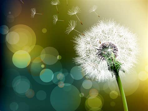 Dandelion Wishes thru a 180 s the lowly dandelion speaks