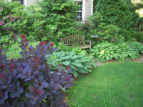 Smoke Bush Hosta Landscape Ideas Pinterest Smoke Hosta Garden Layout