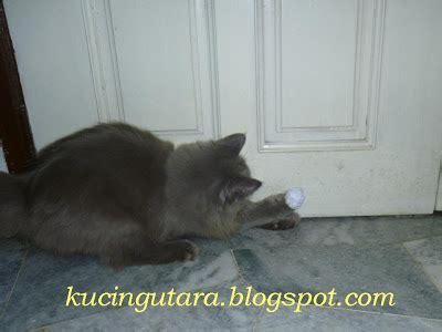 Mainan Kucing Bola Bola Sangkar Tikus kucing utara bola mainan kucing