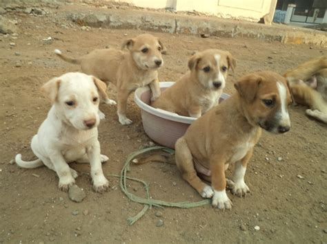 Small Dogs For Home In India Puppy Biting Ankles Stop Dogs As