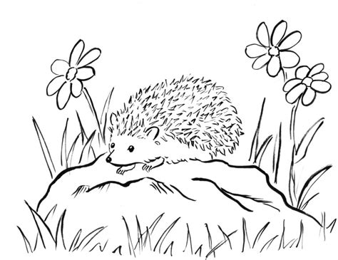 coloring page of a hedgehog hedgehog coloring page samantha bell