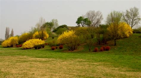 i giardini di marzo si vestono di nuovi colori sito ufficiale comune di cinisello balsamo centro
