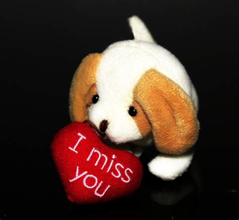 i miss you puppy miss you puppy clipart
