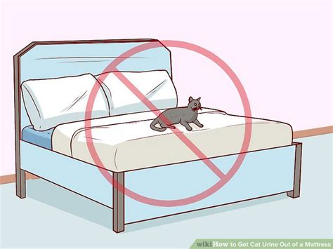 how to get out of mattress how to get cat out of furniture best furniture 2017