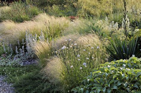 Garten Landschaftsbau Jahnke by 26 Besten Gr 228 Ser Blumen Bilder Auf Ziergr 228 Ser