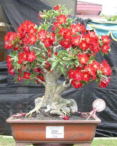Cari Bunga Kaskus jual beli tanaman hias tanamanbaru
