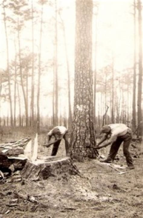 scfc history of forest industry scfc history of forest industry in south carolina