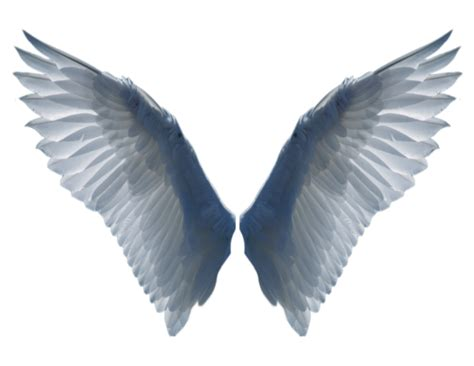 tattoo wings png white angel wings tattoo zoo good graphics
