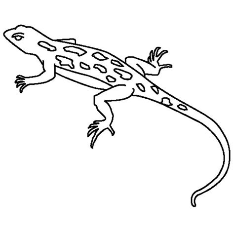 draco lizard coloring pages draco lizard free coloring pages