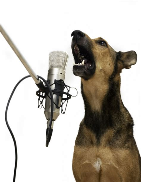 puppy singing can your sing doggies