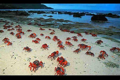 imagenes de animales que migran http de10 com mx gt gt fotos las 10 migraciones animales