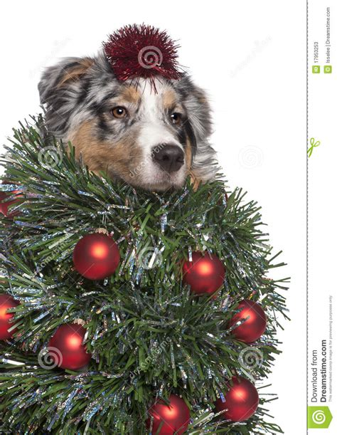 christmas tree dogs home design inspirations