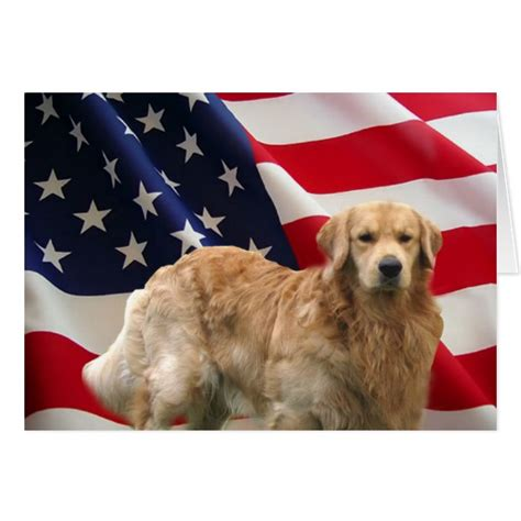 golden retriever flags golden retriever eddie american flag card zazzle