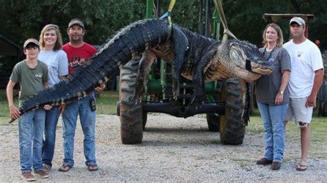 alabama family catches record breaking alligator abc news