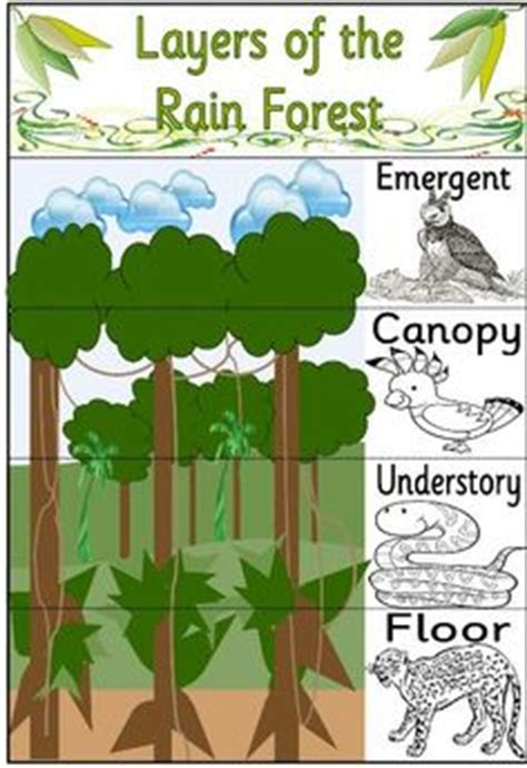 Section 182 Ipc by Classroom Ipc Rainforest On Food Chains