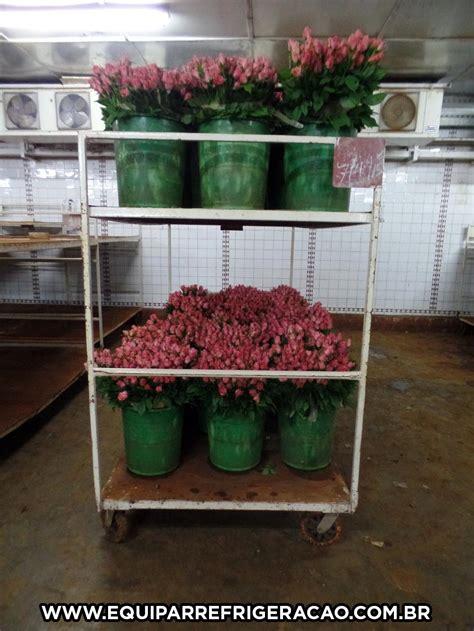 c 226 maras frigor 237 ficas para flores equipar refrigera 231 227 o - Camaras Frigorificas Para Flores